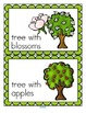 Apples Life Cycle Centers and Activities