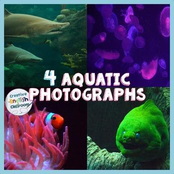 Aquatic Life Photographs