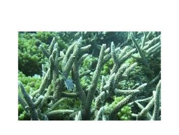 Aquatic Plants PPT