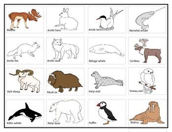 Arctic Animals: Match-up Cards