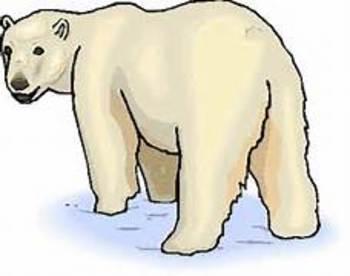 Arctic & Desert Animals