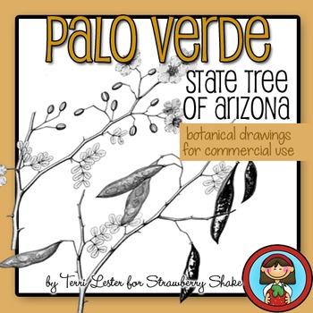 Arizona State Tree PALO VERDE - Botanical drawings
