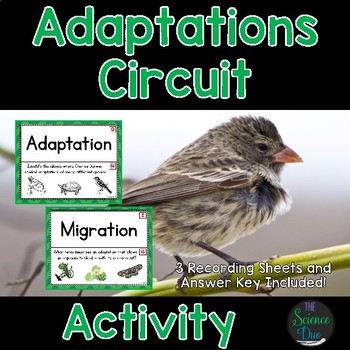 Adaptations - Around the Room Circuit