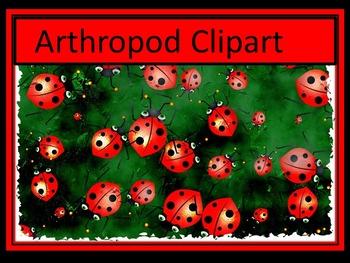 Arthropod Clipart