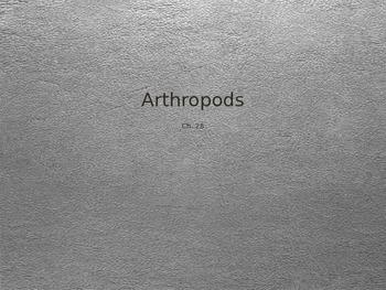 Arthropod PowerPoint