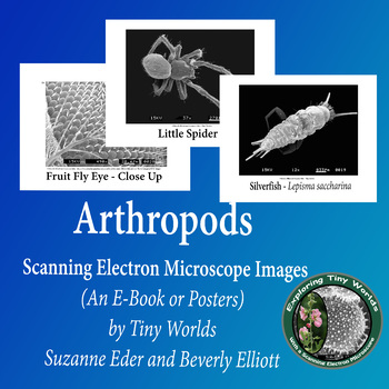 Arthropods Imaged by a Scanning Electron Microscope