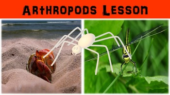Arthropods Lesson with Power Point, Worksheet, and Creativ