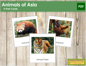 Asian Animals: 3-Part Cards