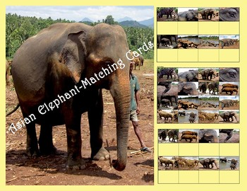 Asian Elephant Matching Cards