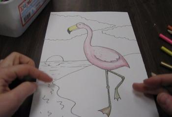 Audubon Flamingo Color