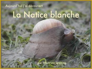 Aujourd'hui j'ai découvert La Natice blanche