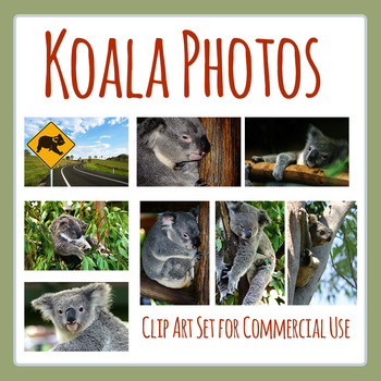 Australian Animals - Koala Photo / Photographic Clip Art f