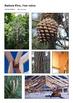 Australian Timbers