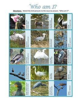 Avian Identification:Using riddle boxes to identify typica