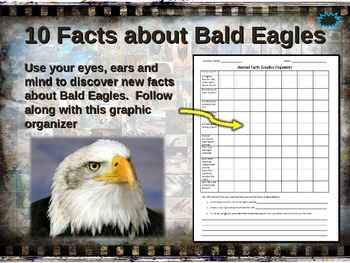 BALD EAGLES: 10 facts. Fun, engaging PPT (w links & free g