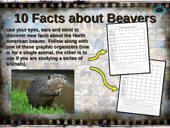 BEAVERS - visually engaging PPT w facts, video links, hand