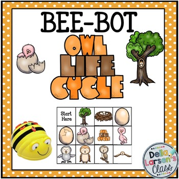 BEE-BOT Owl Life Cycle