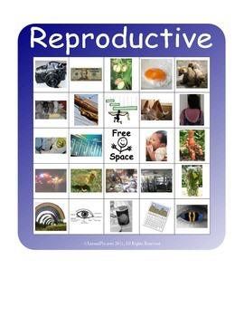 BINGO!  Reproductive System Terminology