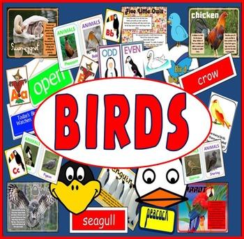 BIRDS RESOURCES LITERACY SCIENCE EYFS, KS 1-2 ANIMALS OWLS