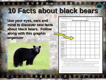 BLACK BEAR: 10 facts, engaging PPT, links, free graphic or