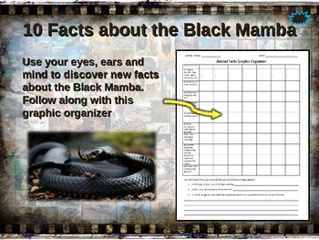 BLACK MAMBA: 10 facts. Fun, engaging PPT (w links & free g