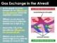 BUNDLE - Anatomy PowerPoints