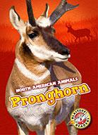 Pronghorn