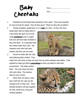 Baby Cheetahs Informational Text