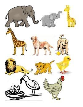 Baby vs. Adult Animals
