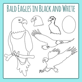 Bald Eagles in Black and White Line Art - Commercial Use C