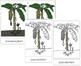 Banana Plant Nomenclature Cards