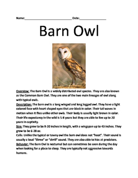 Barn Owl - Review Article Lesson Facts Questions Vocabular