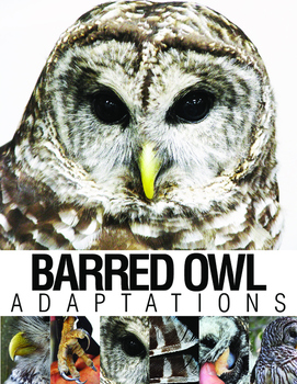Barred Owl Adaptations