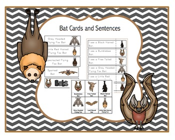 Bat Cards & Sentences  9 vocabulary cards 9 large vocabula