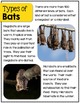 Bats- A Nonfiction Unit