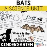 Bats: An Animal Study