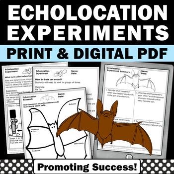 Bats Echolocation Science Experiment Stellaluna Book Activities