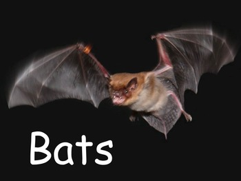 """Bats Nonfiction PowerPoint """"Book"""" for Late First Through F"""