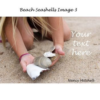 Beach Seashells Image 3