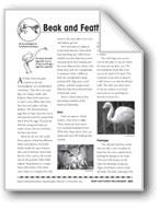 Beak and Feather News/Noticias de plumas y picos