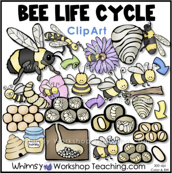 Bee Life Cycle Clip Art (50 Graphics) Whimsy Workshop Teaching