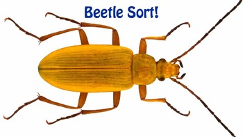 Beetle Sort!  A pattern puzzle for kindergarten through grade 2.