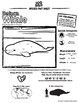 Beluga Whale -- 10 Resources -- Coloring Pages, Reading &