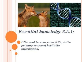 Big Idea 3.A.1 AP Biology Molecular Genetics DNA RNA Repli
