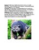 Binturong - endangered animal article information facts qu
