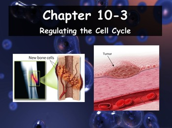 Biology - 10.3 Regulating the Cell Cycle Powerpoint and Gu