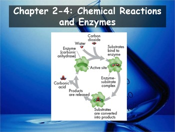 Biology - (2.4: Chemical Reactions and Enzymes PPT and Gui