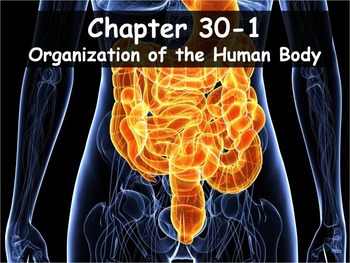 Biology - 30.1 (Part 1) Organization of the Human Body PPT