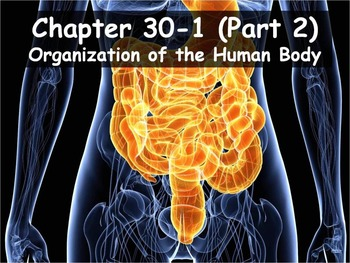 Biology - 30.1 (Part 2) Organization of the Human Body PPT
