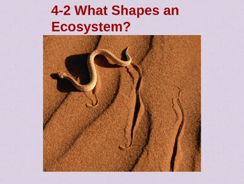 Biology 4.2 What Shapes an Ecosystem Fill-In-The-Blank Not